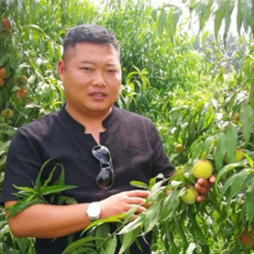 砀山|酥梨|黄桃|砀山酥梨网|砀山酥梨