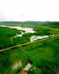 黄河故道风景区