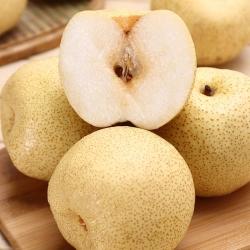 百年绳氏•酥梨
